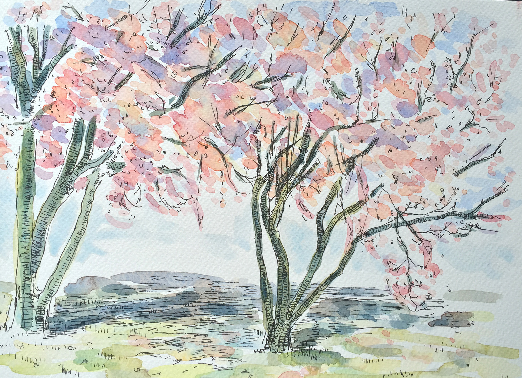 Two Trees in Blossom Study (2016)